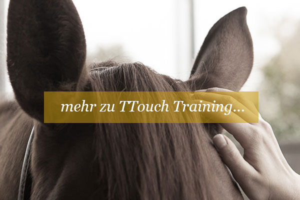 was-ist-ttouch-tellington-touch