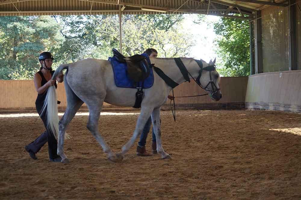 schreckhaftes pferd führen