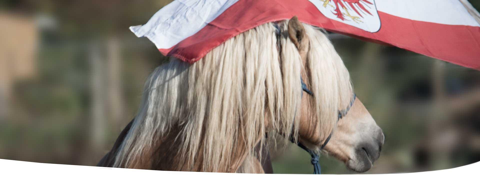 Pferdetraining-Erfolge-Bodenarbeit