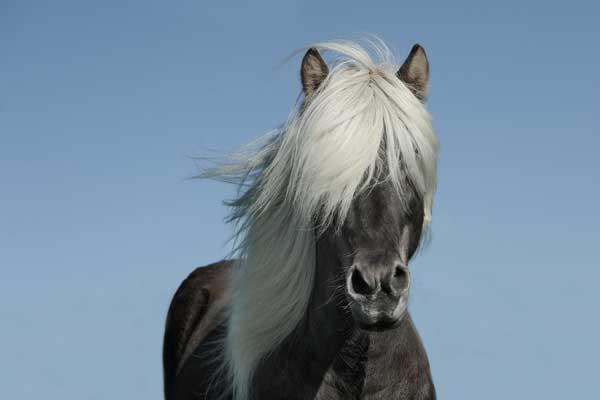 pferd-hebt-fusse-nicht-connected-riding-tellington-ttouch
