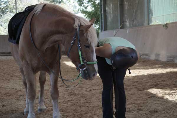 pferd-stolpert-beim-reiten