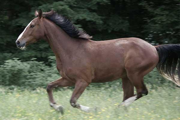 rechtsgalopp-funktioniert-nicht-pferd