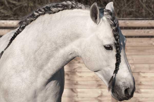 tellington-ttouch-knieprobleme-beim-pferd-connected-riding